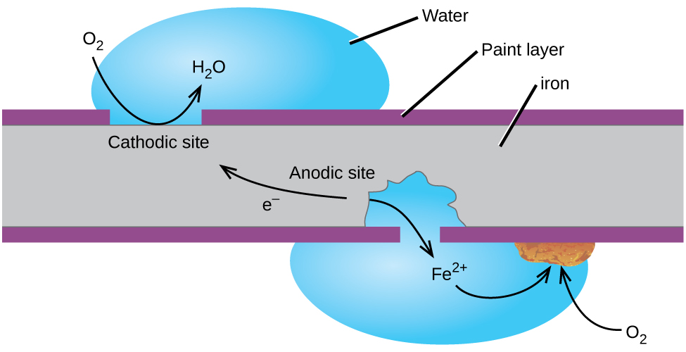 "A grey rectangle, labeled ""iron,"" is shown with thin purple layers, labeled ""Paint layer,"" at its upper and lower surfaces. A gap in the upper purple layer at the upper left of the diagram is labeled ""Cathodic site."" A blue droplet labeled ""water"" is positioned on top of the gap. A curved arrow extends from a space above the droplet to the surface of the grey region and into the water droplet. The base of the arrow is labeled ""O subscript 2"" and the tip of the arrow is labeled ""H subscript 2 O."" A gap to the right and on the bottom side of the grey region shows that some of the grey region is gone from the region beneath the purple layer. A water droplet covers this gap and extends into the open space in the grey rectangle. The label ""F e superscript 2 positive"" is at the center of the droplet. A curved arrow points from the edge of the grey area below to the label. A second curved arrow extends from the F e superscript 2 positive arrow to a rust brown chunk on the lower surface of the purple layer at the edge of the water droplet. A curved arrow extends from O subscript 2 outside the droplet into the droplet to the rust brown chunk. The grey region at the lower right portion of the diagram is labeled ""Anodic site."" An arrow extends from the anodic site toward the cathodic site, which is labeled ""e superscript negative."""