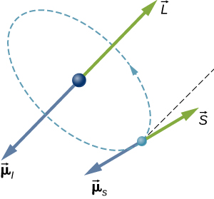 The orbit of an electron in an atom is illustrated as a small sphere in a circular orbit about a larger sphere at the center of the circle. The direction of travel is right handed (counter clock wise if looking down at it.) At the nucleus, a vector L points up (again, as viewed from above) and a vector mu sub l points down. At the electron, a vector S points at an unspecified angle with respect to the direction of L, and a vector mu sub s points in the opposite direction to S.