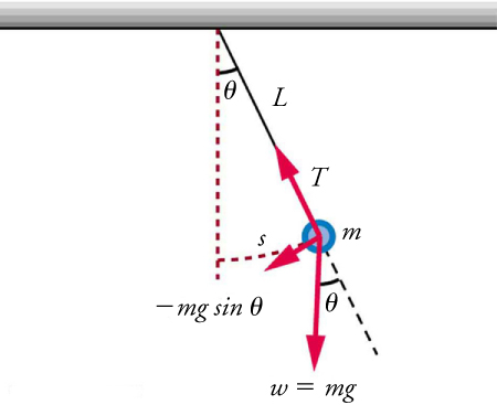 A pendulum is shown with a small-diameter bob and a string that has a very small mass but is strong enough not to stretch. The linear displacement from equilibrium is labeled s, the length of the arc. Also shown are the forces on the bob, which result in a net force of  negative m times g sine angle toward the equilibrium position.