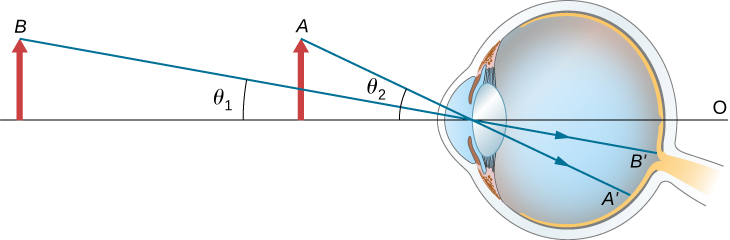 Two objects of the same size are shown in front of an eye. Object A is closer to the eye and forms an angle theta 2 with the optical axis. Object B is farther away and forms an angle theta 1 with the optical axis. Inside the eye, the rays strike the retina. Ray B prime is closer to the optical axis than ray A prime.