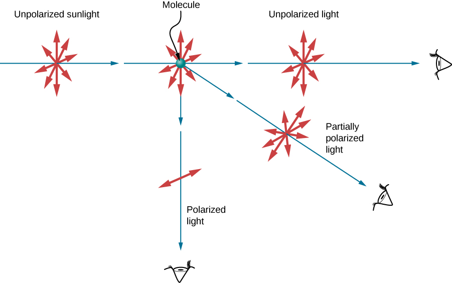 The figure illustrates the scattering of unpolarized light by a molecule. As usual, the rays are represented by straight blue arrows and the electric field directions by double headed red arrows. The unpolarized incident light has electric field vectors oscillating in all directions in the plane perpendicular to the direction of the propagation of the light rays. The molecule scatters the light in all directions. Light that is scattered in the same direction as the incident light remains unpolarized. Light scattered in the direction perpendicular to the direction as the incident light is polarized perpendicular to the plane defined by the incident and the scattered rays. Light that is scattered in an intermediate direction is partially polarized. The electric field perpendicular to the plane has a larger amplitude than the field parallel to the incident ray.