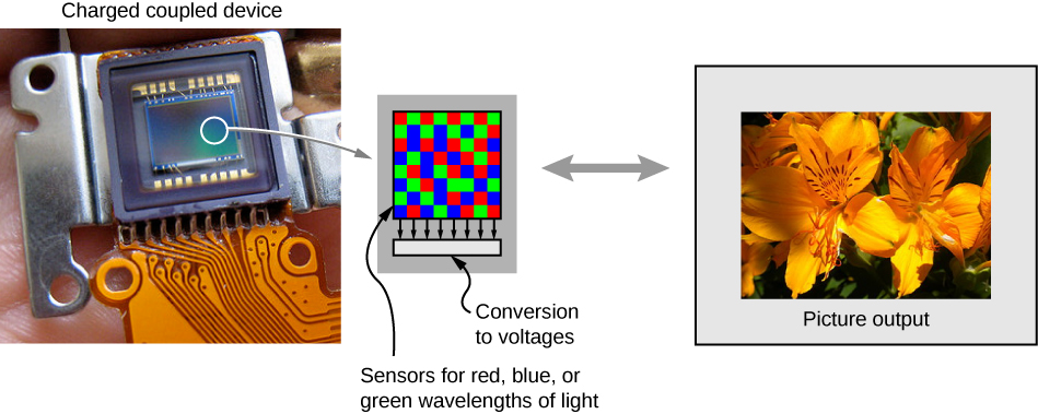"A photograph of a charge coupled device is shown. A small part of this is enlarged and shows several pixels with red, blue and green squares. This is labeled ""sensors for red, blue or green wavelengths of light"" and ""conversion to voltages"". A photograph of flowers is shown, labeled ""picture output""."