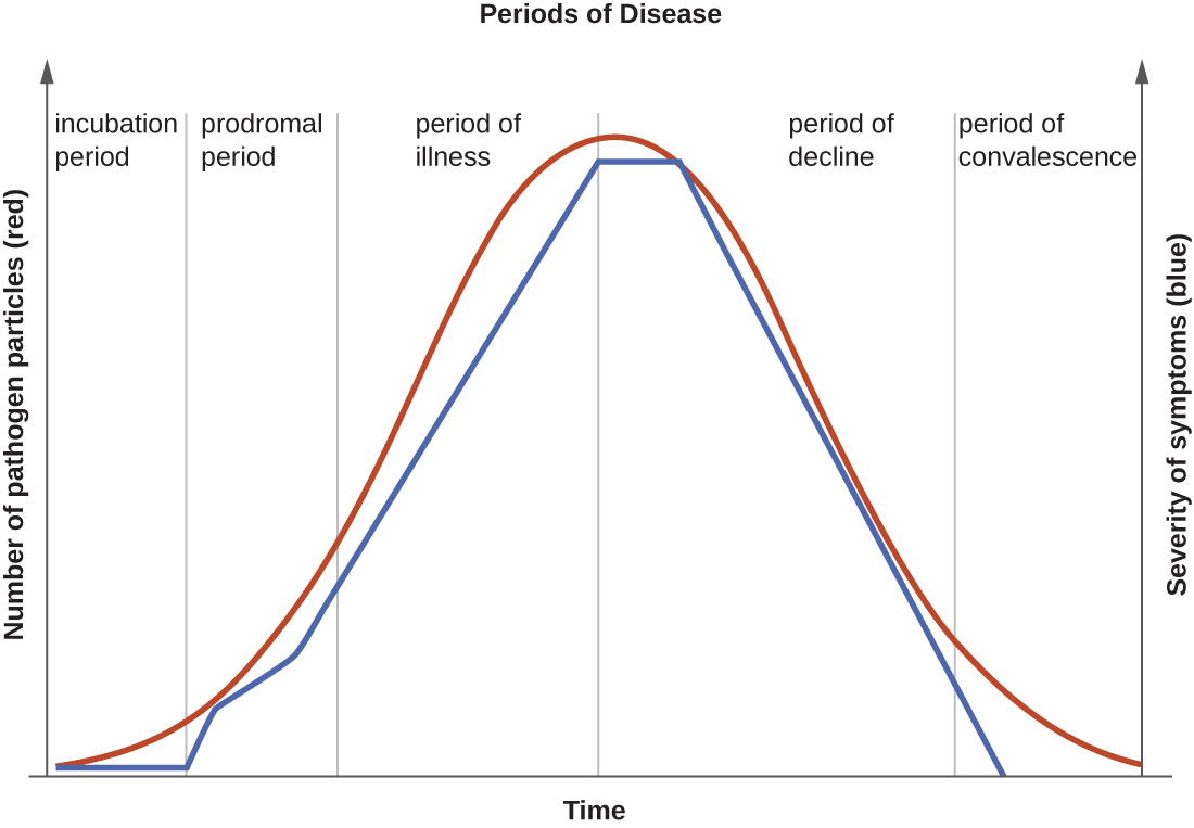 "A graph titled ""Periods of Disease"" with time on the X axis and two separate Y-axes: number of pathogen particles (red) and severity of symptoms (blue). Both of these lines mirror each other and have a general bell shape. The first stage is incubation period when there are few pathogens and symptoms are mild. The next stage is prodromal period when the number of pathogens is increasing and symptoms are becoming more severe. The next stage is period of illness where numbers of pathogens and symptoms both continue to increase. The next stage is period of decline in infection where the number of pathogens is decreasing and symptoms are becoming less severe. The final stage is period of convalescence when symptoms go away and the number of pathogens decrease. Note that there are still pathogens present even after there are no more symptoms of the disease."