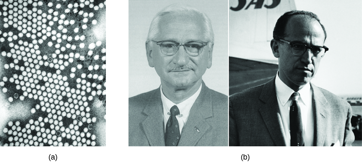 a) Micrograph of many circles. B) Photos of Albert Sabin and Jonas Salk.