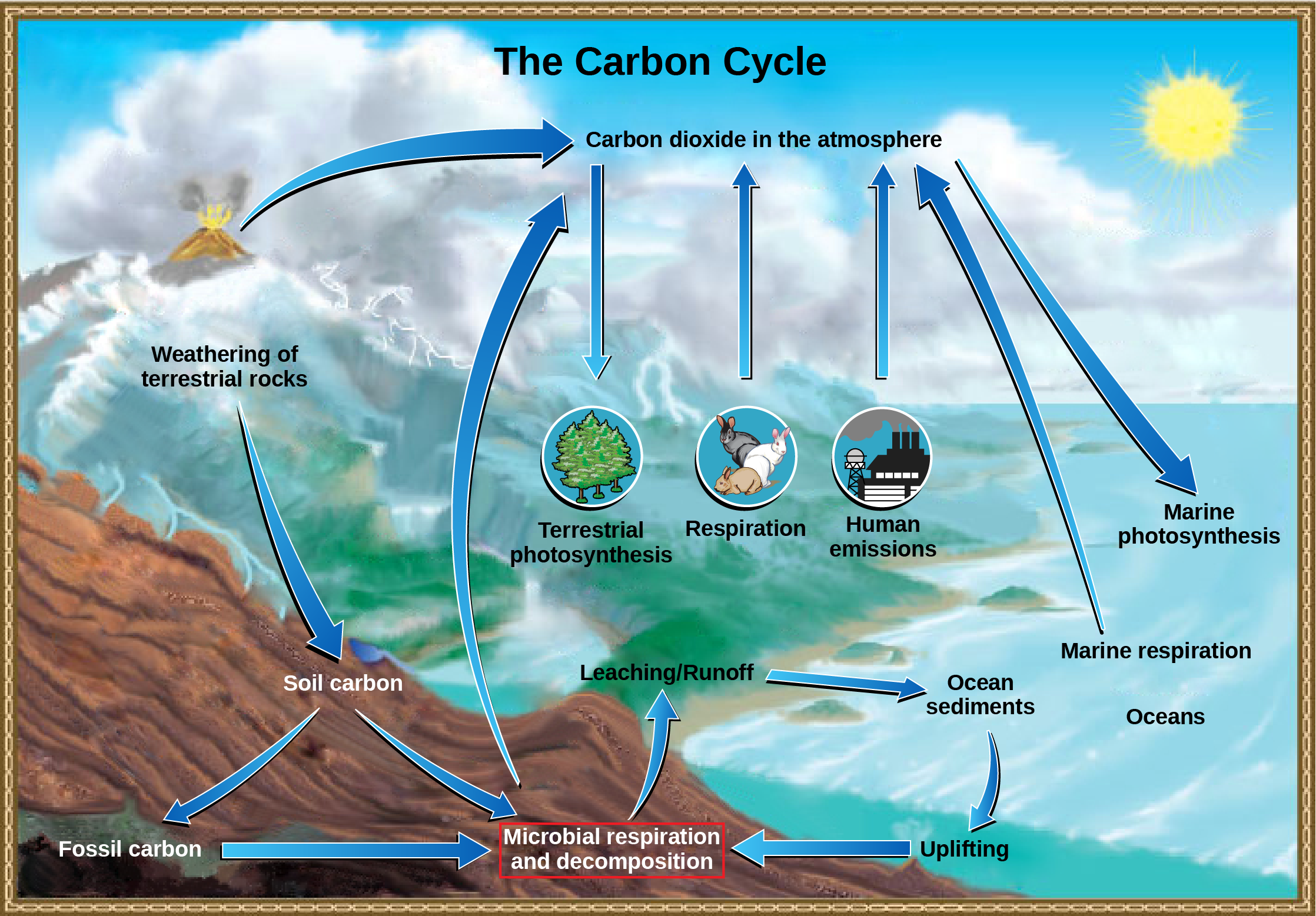 An illustration shows the carbon lifecycle.  Carbon dioxide in the atmosphere occurs by way of volcanic eruptions, animal, microbial and marine respiration, and human emissions - such as from factories.  It is absorbed by terrestrial photosynthesis from plants, and marine photosynthesis.  The weathering of terrestrial rocks turns into soil carbon, which then branches into either fossil carbon, or microbial respiration and decomposition; fossil carbon also contributes to this.  This decomposition has a leaching, or runoff effect, and enters the ocean as sediments.