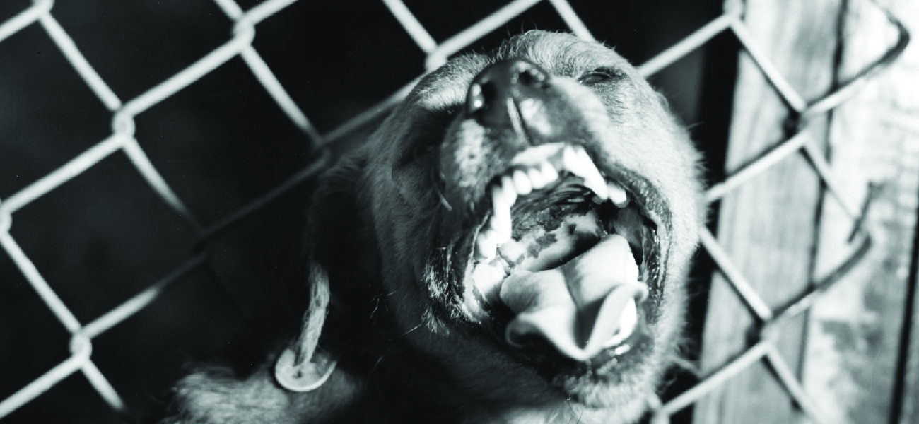 Photo of a snarling dog.