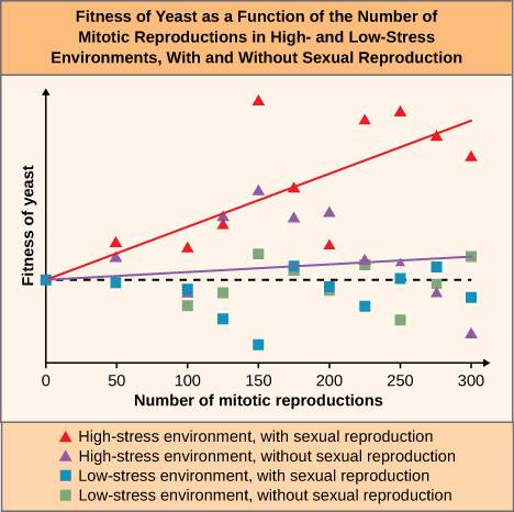 The line graph is titled: Fitness of Yeast as a function of the number of mitotic reproductions in High and low stress environments with or without sexual reproduction. The key at the bottom states that red tringles are high-stress environments with sexual reproduction, purple triangles are high-stress environments without sexual reproduction, blue squares are low-stress environment with sexual reproduction and green squares are low stress environments without sexual reproduction. The x-axis is labelled Number of mitotic reproductions and has tick marks for 0, 50, 100, 150, 200, 250, and 300. The Y axis is labelled 0 approximately ¼ of the way up the graph. There is a red diagonal line that starts at 0,0 and ends near the top of the y-axis when the x-axis value is 300. There is a purple diagonal line that starts at 0, 0 and ends slightly above 0 at 300.  At 50 on the x axis, there is a blue square at 0 on the y-axis, a purple and a red triangle above zero . At 100 on the x-axis, there is a green square and a blue square under the 0 point and a red square above the 0 point. Between 100 and 150, there is a blue square and green square below and a red triangle and a purple triangle above the 0.  At the 150 point on the x axis, there is a blue square well below the 0, a green square a bit above the 0, an purple and red triangles well above the 0. Between 150 and 200, all four colors are above 0. At the 200 point, the blue and green squares are below 0 and the red and purple triangles are well above 0. Between 200 and 250, the blue square is below 0 and all other colors are above 0. At 250 the green square is well below 0, the blue square is right on 0, the purple triangle is above 0, and a red triangle near the top of the graph.  Between 250 and 300 the purple and green triangles are below zero, the blue square is above zero, and the red triangle is near the top of the graph. At 300, the purple triangle and blue square are below zero, the green square is above zero, and the red triangle is near the top of the graph.