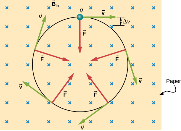 An illustration of the motion of a charged particle in a uniform magnetic field. The magnetic field points into the page. The particle is negative and moves in a clockwise circle. Its velocity is tangent to the circle, and the force points toward the center of the circle at all times.