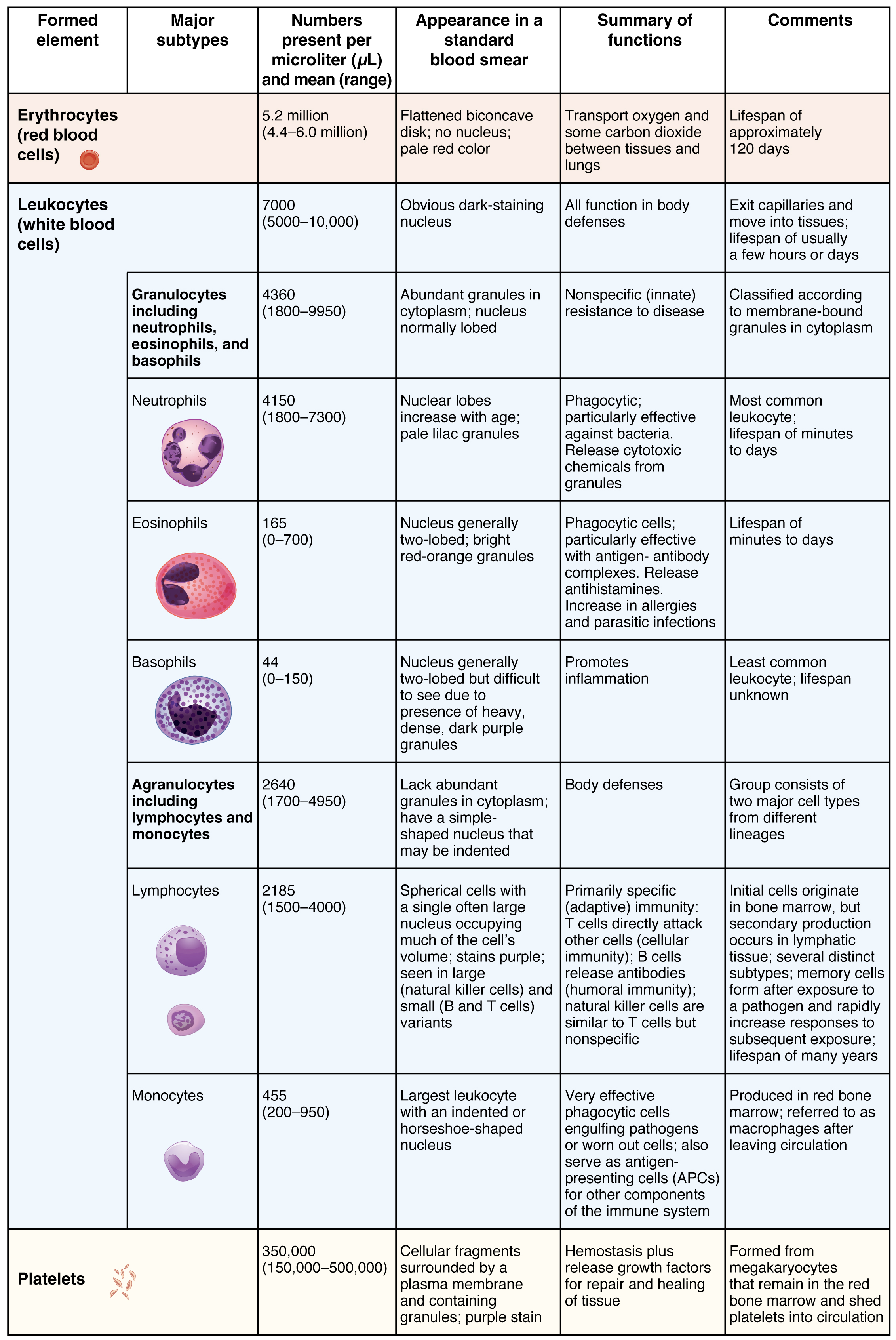Figure 18.5 Summary of Formed Elements in Blood