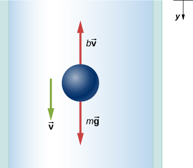 The free body diagram shows forces m times vector g pointing vertically down and b times vector v pointing vertically up. The velocity, vector v, is vertically down. The positive y direction is also vertically down.