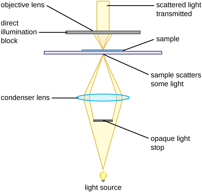 Figure 2.14 An opaque light stop inserted into a brightfield microscope is used to produce a darkfield image.