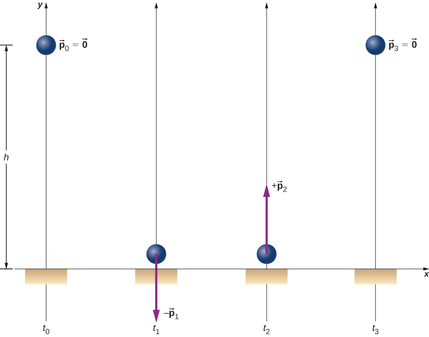 A ball is shown at four different times. At t sub 0 the ball is at a distance h above the floor and has p sub 0 equals 0. At t sub 1 the ball is near the floor. A downward arrow at the ball is labeled minus p sub 1. At t sub 2 the ball is near the floor. An upward arrow at the ball is labeled plus p sub 2. The p sub 1 and p sub 2 arrows are the same length. At t sub 3 the ball at height h again and p sub 3 equals zero.